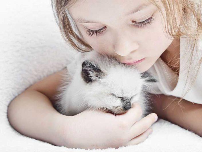 Il Sacro di Birmania, un gatto adatto ai bambini