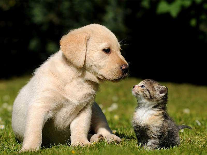 Come far convivere cane e gatto felicemente