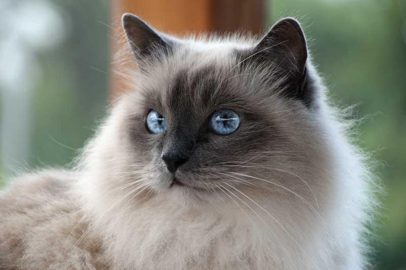 Controllare quotidianamente la salute del tuo gatto