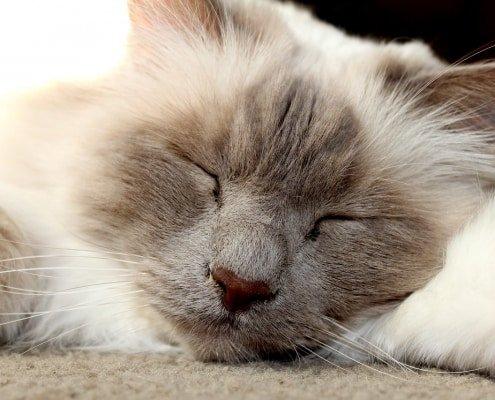 Aiutare i nostri gatti a superare l'ansia da temporale