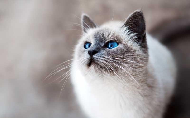 Forfora nel gatto: che cos'è e come eliminarla