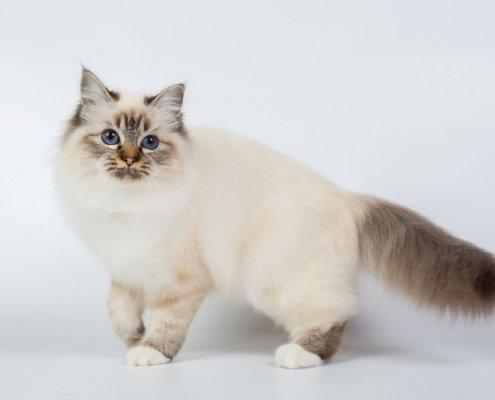 Microchip nei gatti: perchè è importante