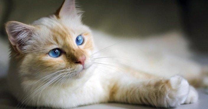 Stomatite del gatto: cos'è e quali sono i rimedi