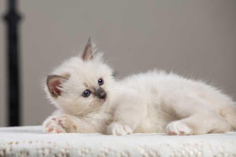 Come evitare che il gatto marchi il territorio in casa