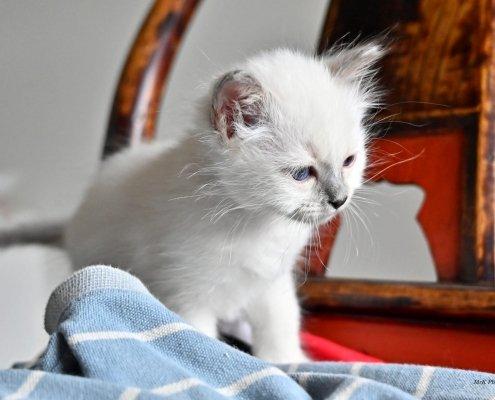 Quando il gatto fa la pasta: perché e cosa significa